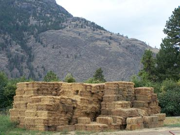 Alfalfa bales ready for transport