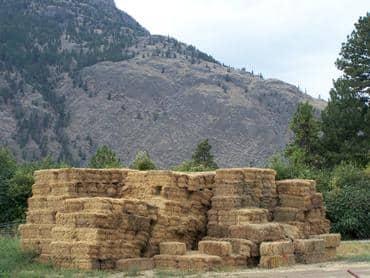 Alfalfa bales ready for transport