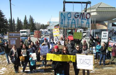 "Calgary crowd says ""No GMO Alfalfa"" in really big letters!"