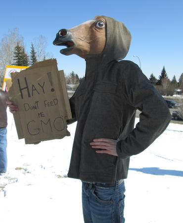 Calgary horses say no GM alfalfa