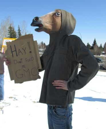Calgary horses say no GM alfalfa