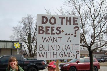 Do the Bees Want a Blind Date with GMOs?