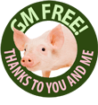 GM Free Pig Button