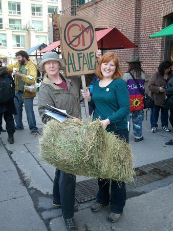 Hay in Toronto