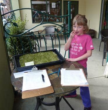 Munching organic alfalfa in Nelson