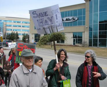 """""""Save Our Hay"""" Guelph Ontario"""