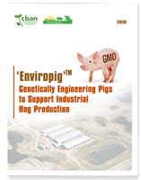 Enviropig: Genetically Engineering Pigs to Support Industrial Hog Production