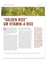 """Golden Rice"" Vitamin A Rice"