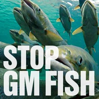 GM Fish
